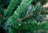 Vánoční stromek Jedle Exclusive 180 cm - umělý #
